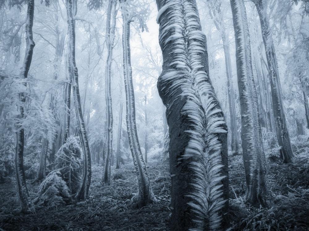 Smrznuta šuma