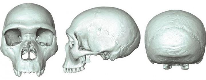 zajednicki predak covjeka i neandertalca
