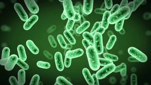 bakterije animacija