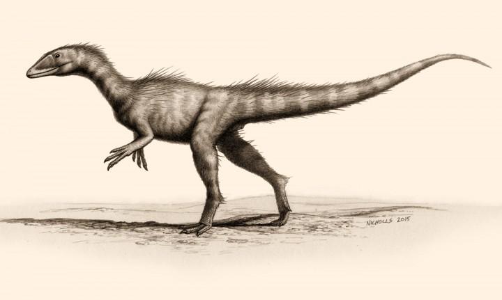 Umjetnički prikaz Dracoraptor haniganija, za kojeg se pretpostavlja kako je bio grabežljivac i lešinar. FOTO: Bob Nichols, paleocreations.com.