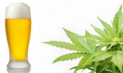 marihuana-alkohol
