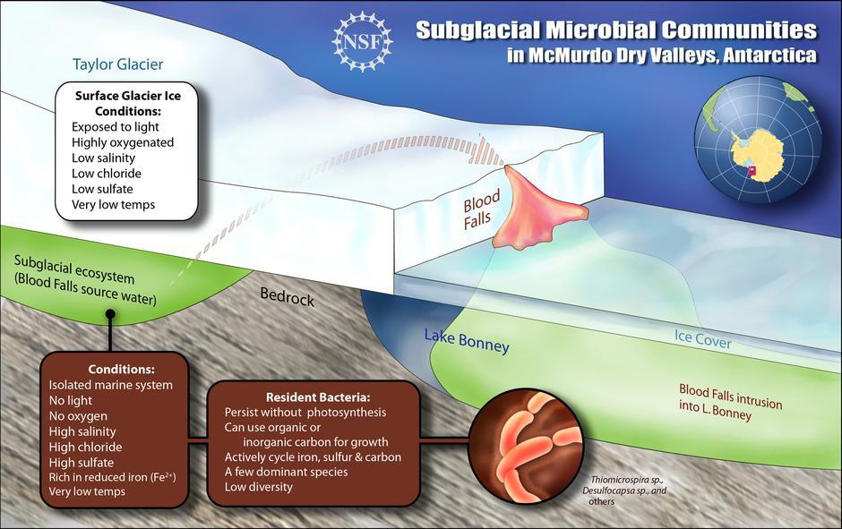 Krvavi slapovi Antarktike | Author: Wikipedia