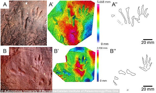 The footprints of the new creature are shown in isolation on the left. 3D models of the outline of the footprints of the new creature were also created (right)