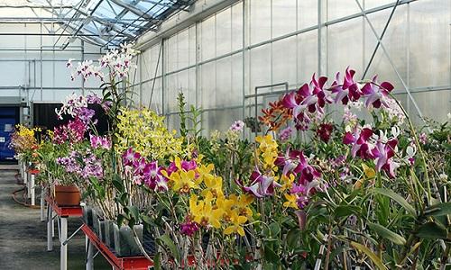 Orhideje (foto: Smithsonian)