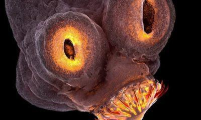 Mikroskop znanost