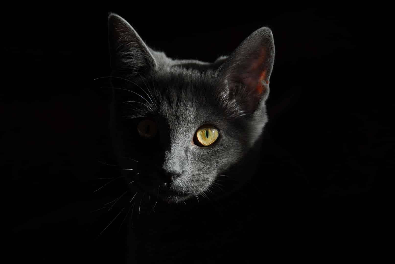 crne djevojke samo maca