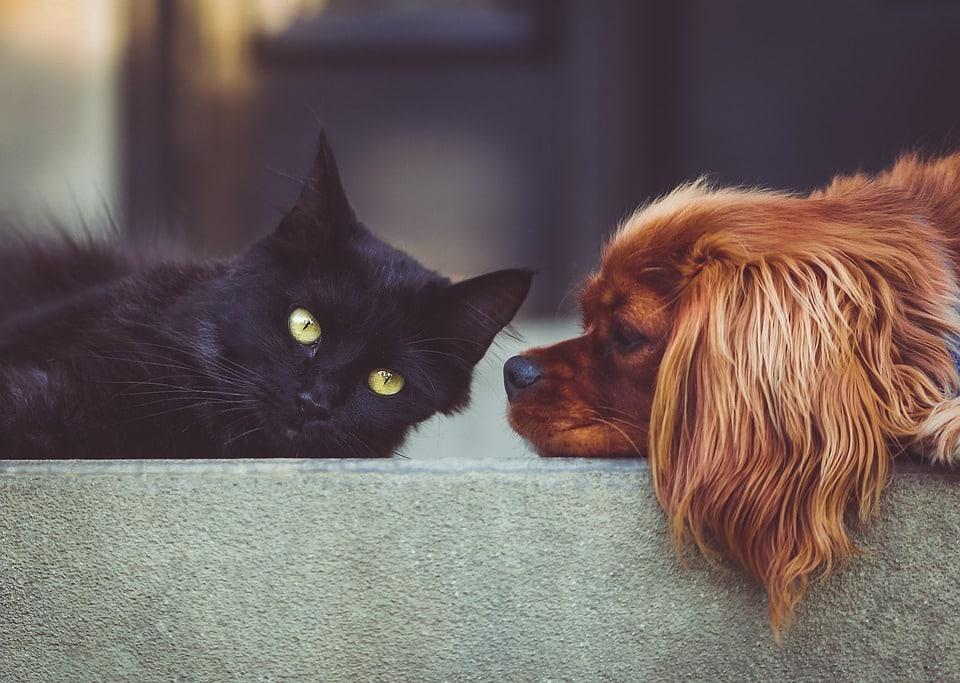kako velika može biti maca crni kurac jebe usku macu