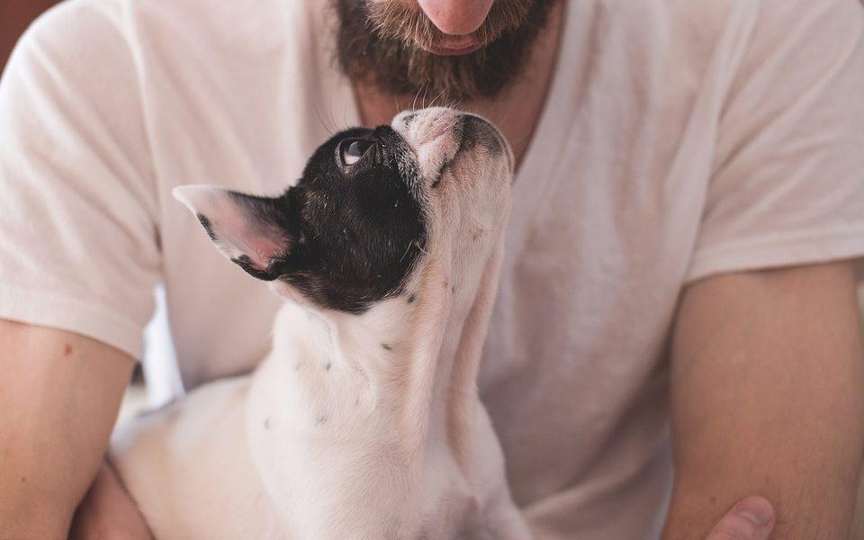 Zašto su psi i njihovi vlasnici toliko slični?