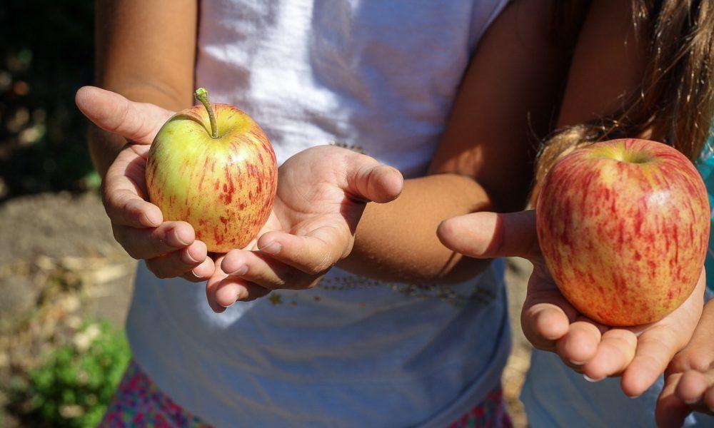 Djeca koja imaju međuobroke imaju kvalitetniju prehranu