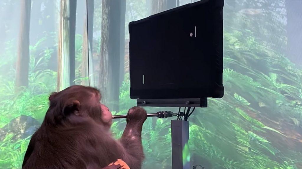 Majmun odigrao video igru svojim mislima uz pomoć ugrađenih Neuralink čipova