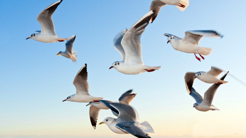 Nova studija otkriva: Na Zemlji živi oko 50 milijardi ptica