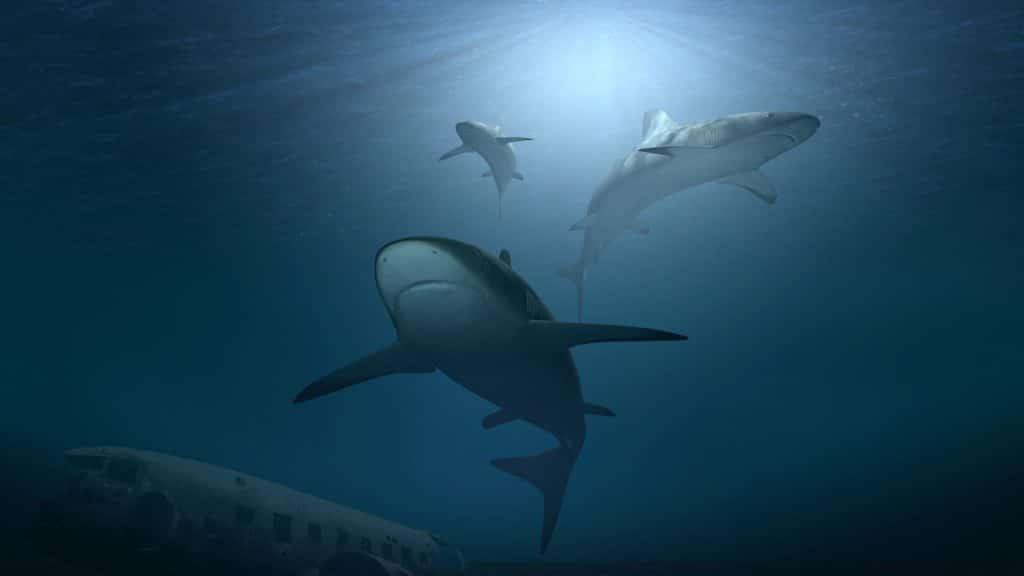 """Znanstvenici tvrde da morski psi koriste Zemljino magnetsko polje kao """"GPS"""" sustav navođenja"""